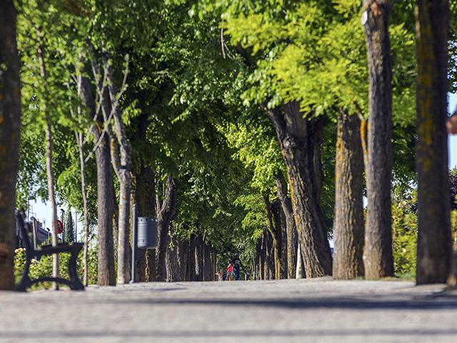 las rozas tree cities of the world